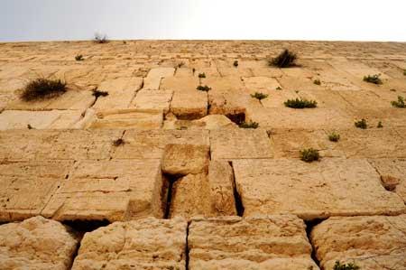 Mur des Lamentations, La Fondation du Patrimoine du Mur occidental