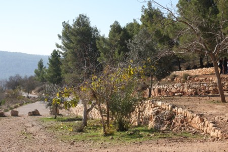 Parashat Emor - outside of israel 5778