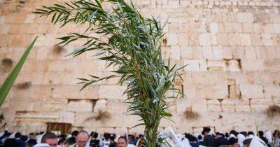 Journey To Jerusalem On The Internet!!!